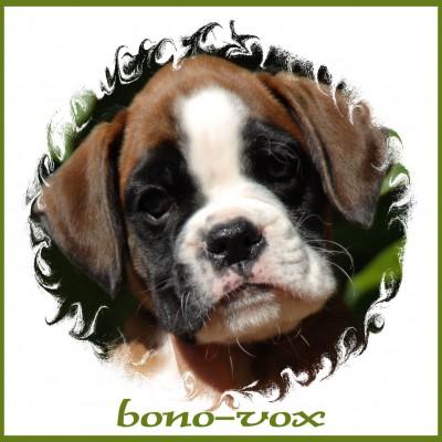 1 Bono-Vox (bono)