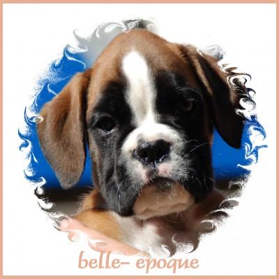 2 Belle-Epoque (Belle)