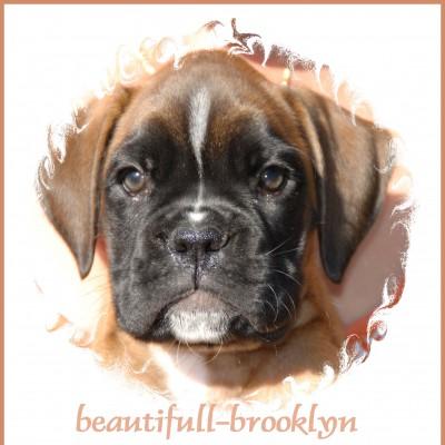 5 Beautiful-Brooklyn (Kanjer)